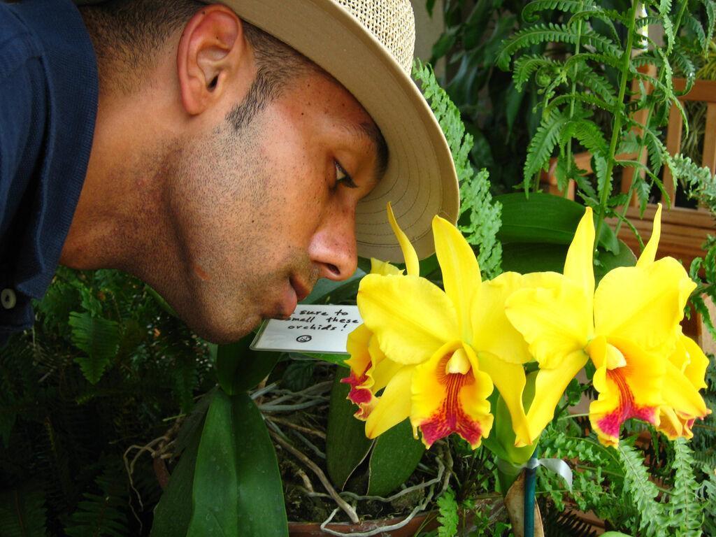 بازیابی حس بویایی با استفاده از سلول های بنیادی