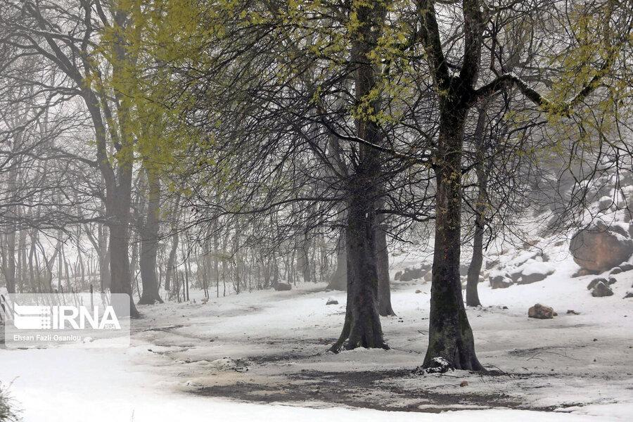 برف روستاهای دهستان میانکوه مهریز را سفیدپوش کرد