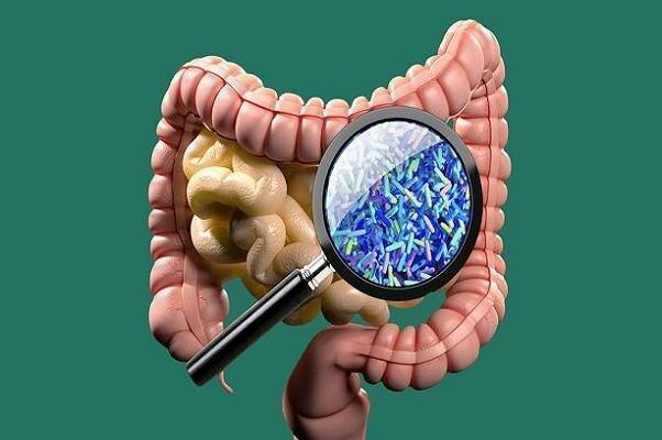 نقش میکروب ها در سلامت انسان ، چگونه میکروب های مفید را در بدن افزایش دهیم؟