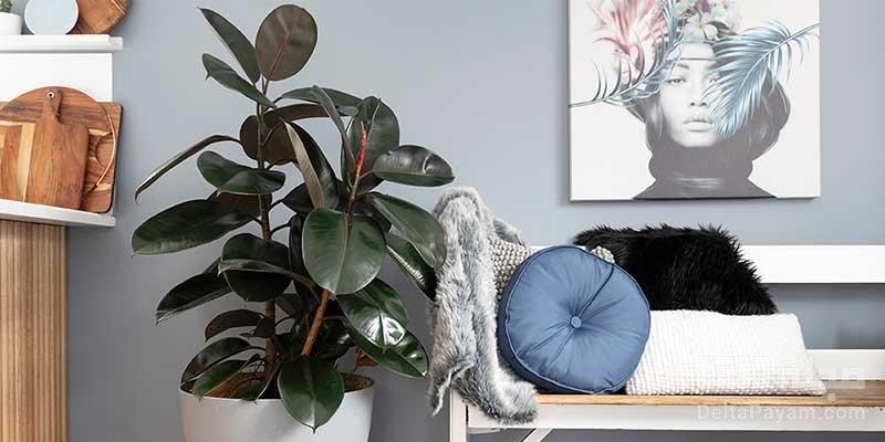 گیاهان آپارتمانی مجلل برای دکوراسیونی لوکس