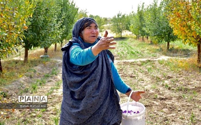 ابلاغ مصوبه های امهال تسهیلات کشاورزان خسارت دیده