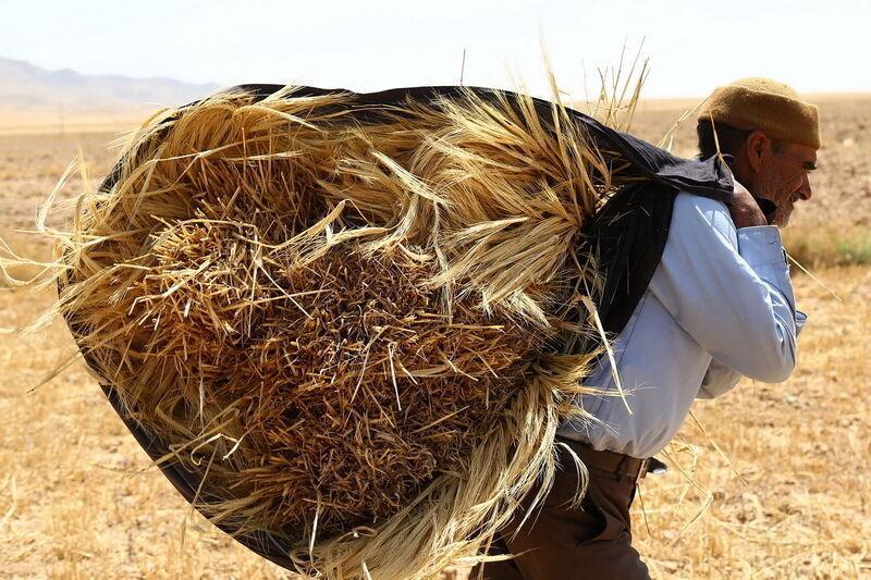 کشاورز کارت یعنی رسمی کردن گرانی کود و نهاده تولید، به جای این کار قیمت ها را کاهش دهید