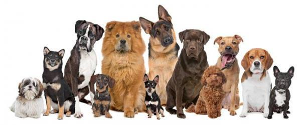 بهترین نژاد سگ نگهبان کدام است؟